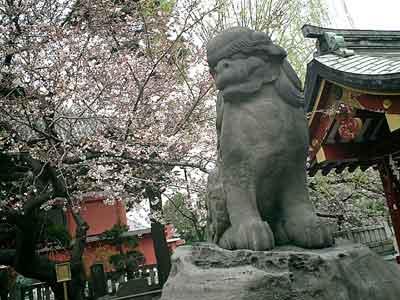 060326 浅草神社狛犬と桜
