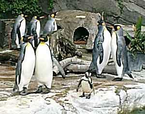 060506 ペンギン
