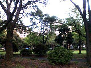 070420 神奈川公園の木々