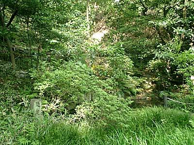 070505 五島美術館庭園 蓬莱池付近
