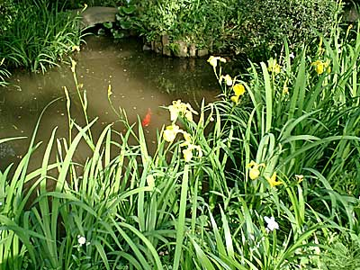 070505 五島美術館庭園 菖蒲園の池