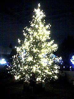 071123 国立西洋美術館庭のツリー